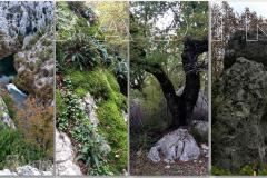 Bioraznolikost prašume Šćadin